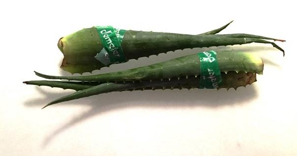 Reseptejä ja treenejä: Aloe veran käyttö sisäisesti ja ulkoisesti